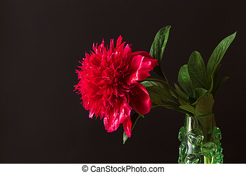 red peony flower and leaves in a vase on a black