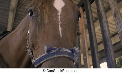 close-up of a horses head in slow motion - close-up of a...