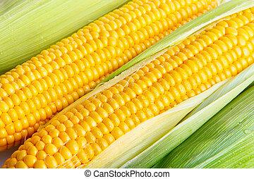 corn  detail between green leaves