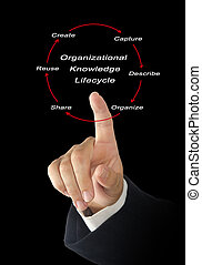 Organizational Knowledge Lifecycle;
