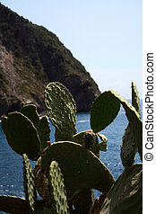 succulents that grow wild on the rocks d - succulents that...