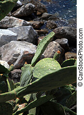 succulents that grow wild on the rocks f - succulents that...