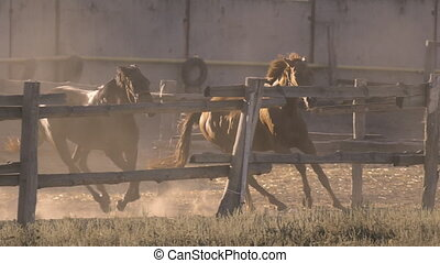 two horses galloping on a ranch in slow motion - two horses...