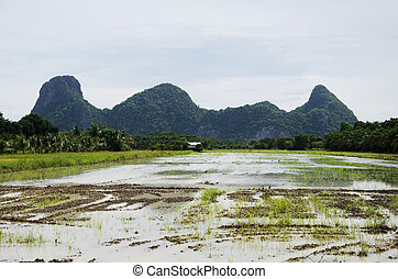 Mountain with rice field and reflection on water in paddy
