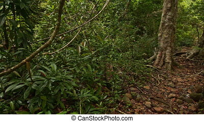 Shady Narrow Path in Thick Tropical Park - closeup shady...