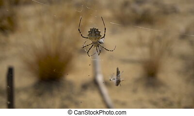 Big spider on the web - Big spider sits on the web. He eats...