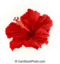 Red hibiscus simple.eps