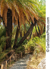 Crete, Greece: forest in Palm Bay, famous touristic...