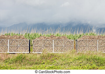 Sugar cane train filled with cane harvest. - A train filled...