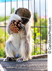 funny monkey - funny little monkey in the cage eating nuts