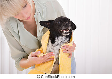 Woman Drying Her Dog With Towel At Home - Close-up Of Woman...