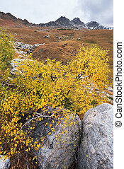 Beautiful Autumn in the mountains - Autumn landscape in the...