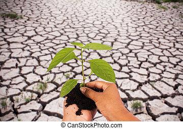 Biologia,  rainless, conceito, mão, Ecologia, árvore, meio ambiente, rentabilidade, verde, segurando, natureza, pessoas, rachado, chão