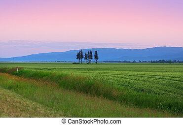 Early morning scene in Montana wheat fields