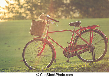 Lovely brown teddy bear in rattan basket on vintage bike in...