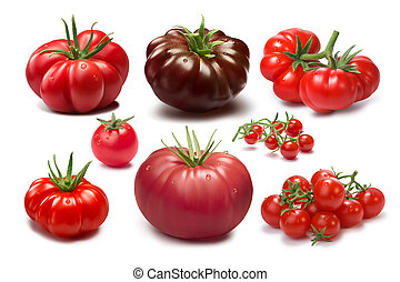 Set of different tomato varieties - Collection of different...