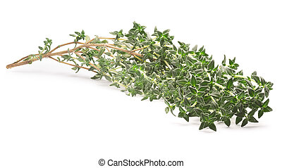 Thyme (Thymus vulgaris), clipping path