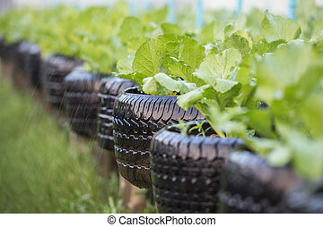 Recycle of tire used in organic vegetable farm - Old black...