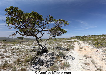 The caatinga landscape in Brazil - The caatinga landscape in...
