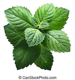 Fresh peppermint leaves (Mentha Piperita). Clipping path,...