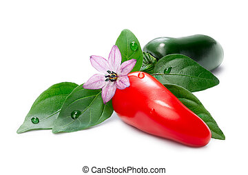 Hot Laminada Peppers (Capsicum Annuum), red and green, with...