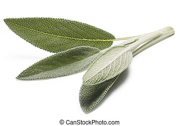 Sage (Salivia Officinalis) leaves. Infinite depth of filed,...