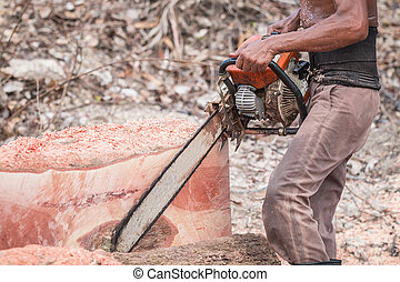 Thai worker cutting trunk with chainsaw