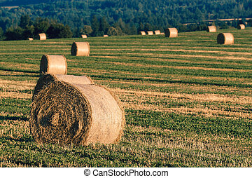 harvested field with straw bales in summer - harvested field...