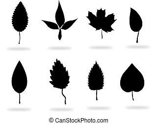 hojas, negro