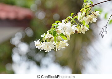 wild water plum flower in garden - wild water plum flower...