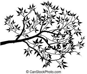 black leaf isolated on white background