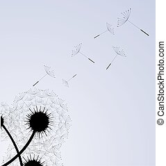 Overblown dandelion with seeds flying away with the...