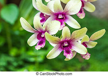 green orchid on nature background