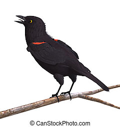 Male Red-winged Blackbird. 3D rendering with clipping path...