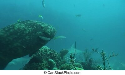 underwater life diving Video Cuba C - Underwater Cuba...