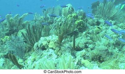 underwater life diving Video Cuba C - Underwater Cuba...
