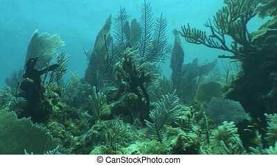 underwater life diving Video Cuba - Underwater Cuba...