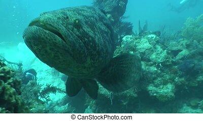underwater life diving Video Cuba - Underwater Cuba...