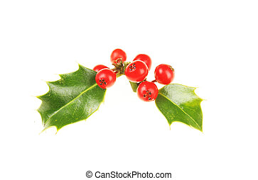 Holly with berries - Two holly leaves with ripe red berries
