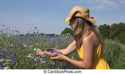 Blond girl in yellow dress gather cornflower flower herbs...
