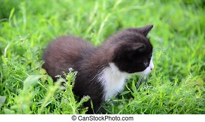 Black and white kitten sitting in grass on the lawn