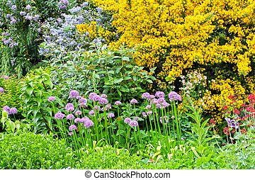 Blooming flowers in the garden - Blooming flowers in the...