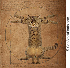 Da Vinci Cat - A cat looks like the Vitruvian man.