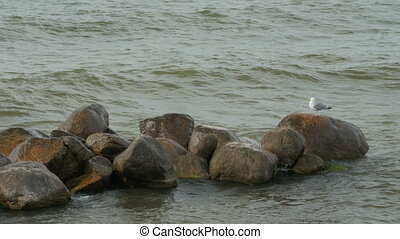 A seagull on a rock - A seagull takes a break from hunting...