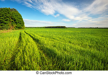 Road in green field and blue sky with clouds