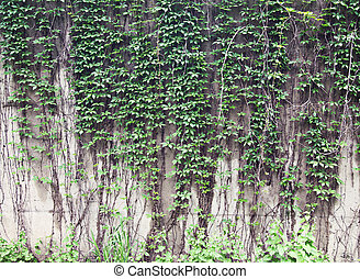 Vines growing on a rock wall - Abstract grunge