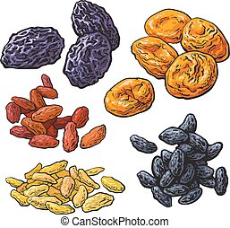 Set of dried fruits - prunes, apricots and raisins, sketch...