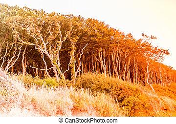 gespensterwald - nienhagen