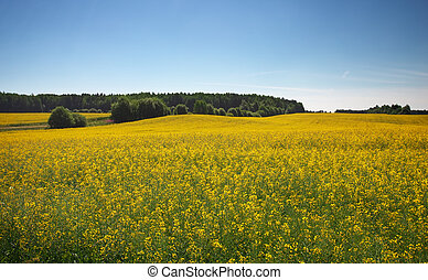 Beautiful landscape with field of yellow canola (Brassica...