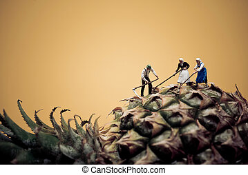 Farmers harvesting pineapple. Macro photo